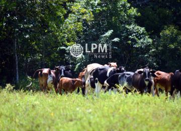 Polícia prende seis homens acusados de contrabandear gado do Brasil para o Suriname