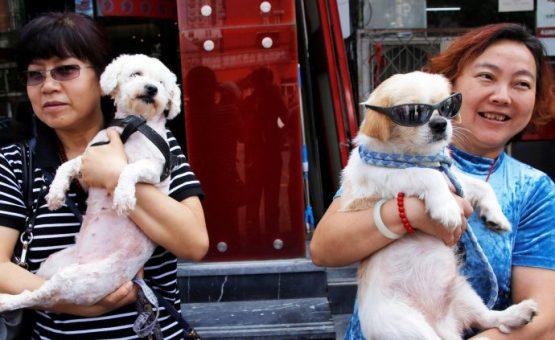 Ativistas reúnem 11 milhões de assinaturas contra festival de carne canina na China
