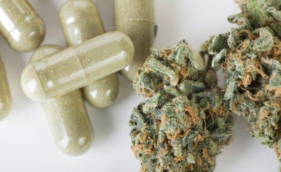 Governo do Suriname é favorável à legalização da maconha para fins medicinais