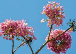 Primavera tem previsão de calor e de temperaturas mais altas