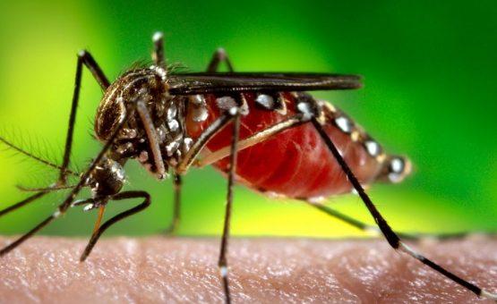 Brasil tem 98 mortes devido à febre amarela desde julho, diz ministério