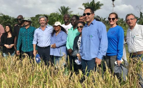 Embaixador Laudemar Aguiar visitou projeto de cultivo de arroz de terras altas em Papatam, no distrito de Moengo