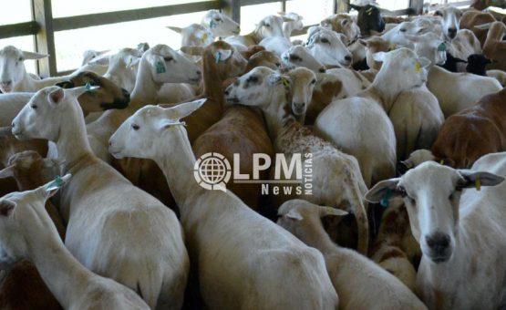 Organização Mundial de Saúde Animal declarou oficialmente o Suriname livre da febre aftosa