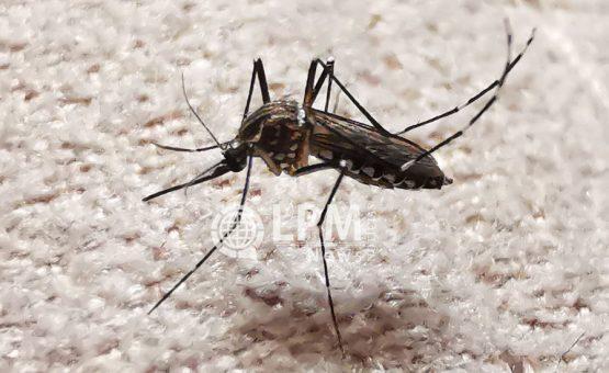 Dia Mundial da Malária foi comemorado em 25 de abril