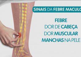Febre maculosa: entenda o ciclo de transmissão e os sintomas da doença