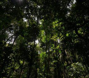 Brasil é o país que mais altera leis que deveriam proteger a Amazônia, indica estudo