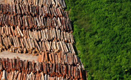 Duitsland stopt deels met bijdrage aan Braziliaanse milieuprogramma's