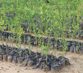 LVV e BID ajustam projeto para fomentar produção de citrus no Suriname