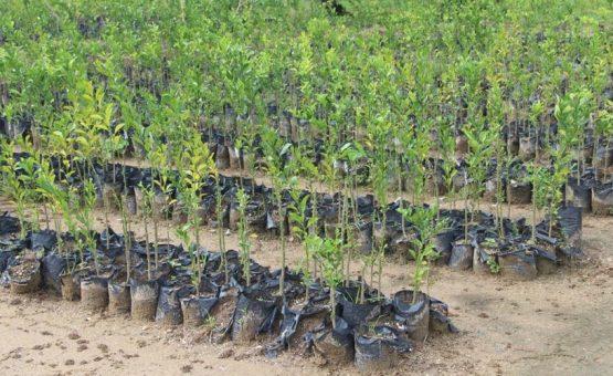 Weer nieuw leven geblazen in citrusindustrie